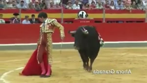Don't turn back on a bull!
